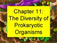 Chapter 11: The Diversity of Prokaryotic Organisms