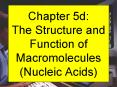Chapter 5d: The Structure and Function of Macromolecules (Nucleic Acids)