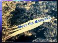 Meet the Mollusks