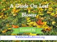 An Ultimate Guide for Leaf Blower