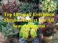Top 10 Small Evergreen Shrubs -  Perfect For All Season Interest