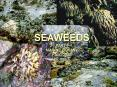 SEAWEED ECOLOGY PART I
