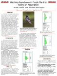 Hatching Asynchrony in Purple Martins: Testing an Assumption